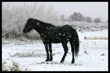 _mg_2516-picture-of-wild-horse-in-snow-storm-border-400-600