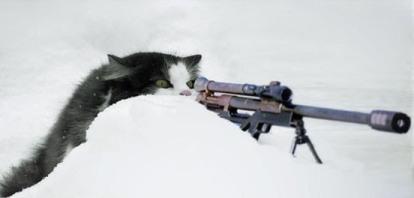 cat_sniper