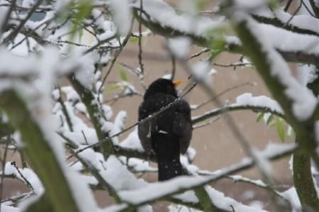 schneevogel1