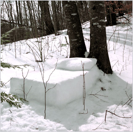 snowbed