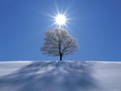 snow-tree-sun