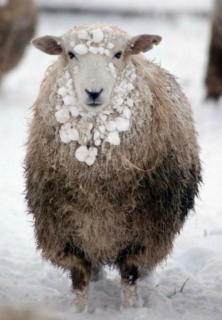 snow_kent17web