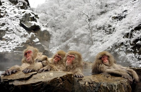 snow_monkeys02